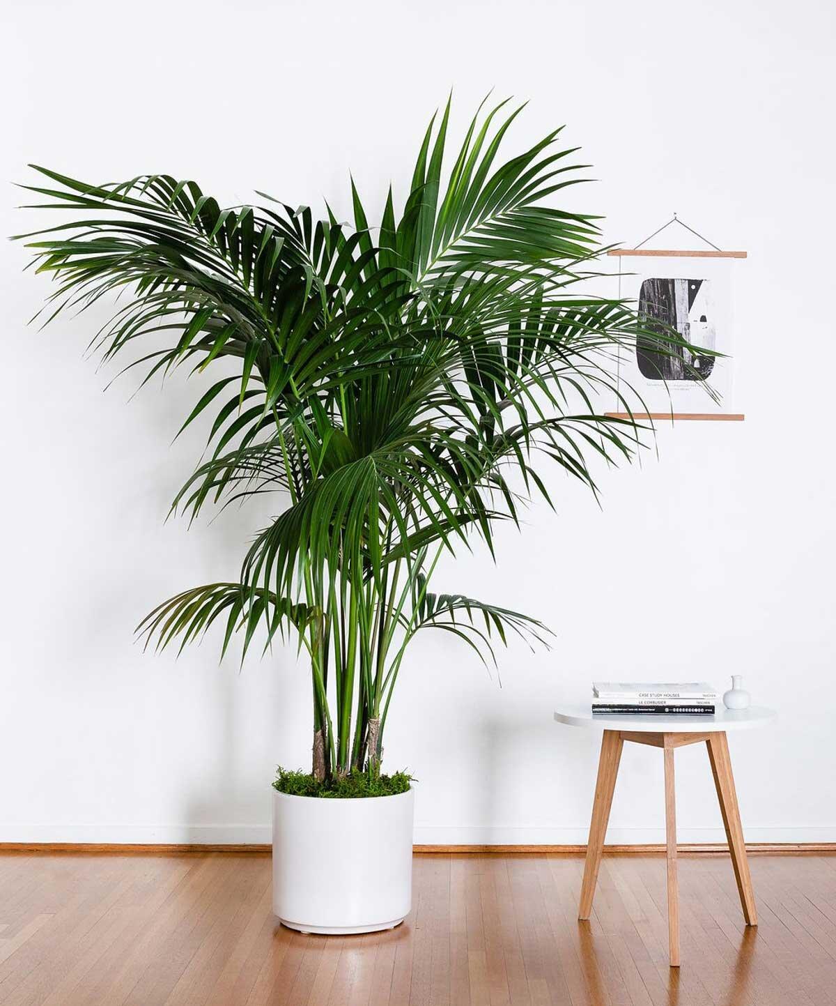 Plantes d'intérieur, en pot, livrées CHEZ VOUS. - Commandez sur leonandgeorge.fr.Plantes XL, L, Tabletops, Mini