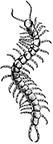 Centipede-144px-1.png