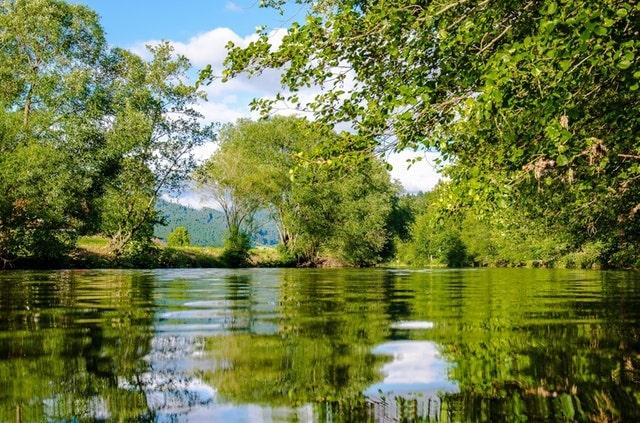 Satu-Korby- trees-lake-serene-min.jpg