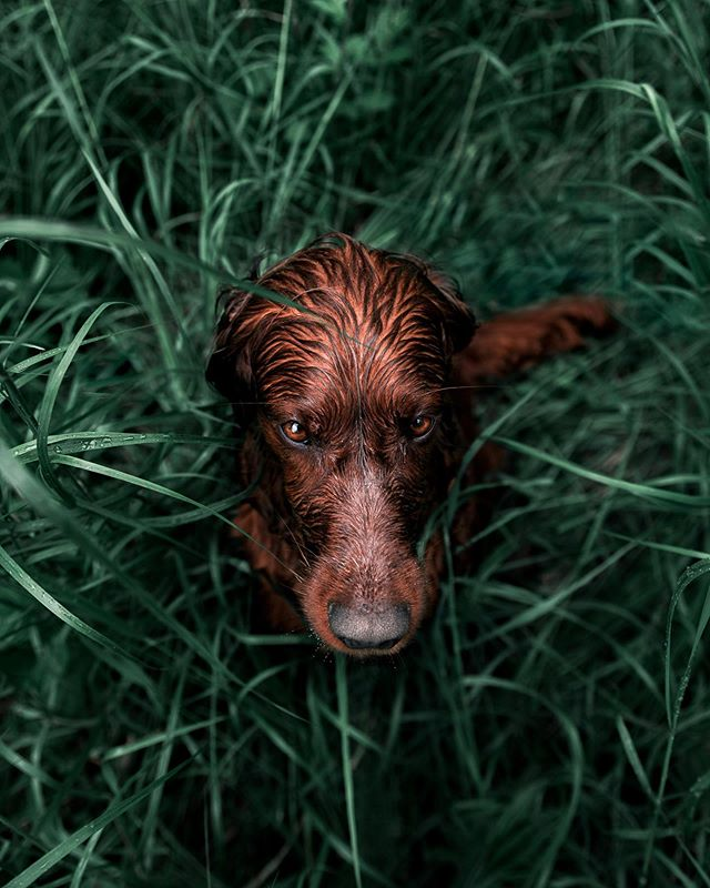 """You didn't bring a towel? Well those dry pants looks nice, let me just """"feel"""" them with my wet fur for a second or two #WetHugs  Our Moody Greenz 2.0 Presets/filters are finally here! Check our story for giveaway and before and afters!💚"""
