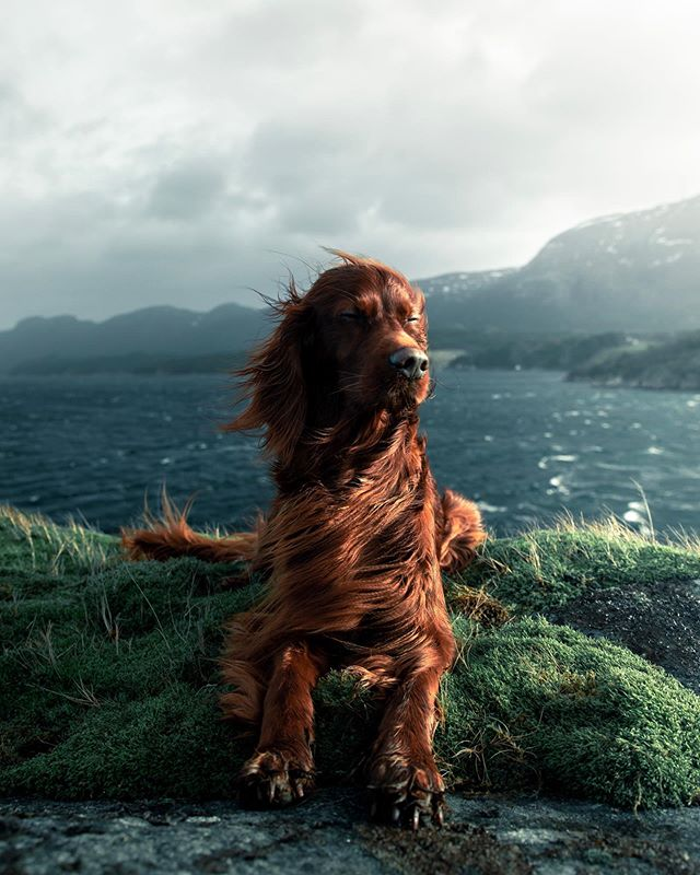 Not all heroes wear capes🌊 . The fjords has a special place in our hearts, the breeze, view and smell can't be explained with words. Where do you and your pet like to hike or walk? Park, mountains, forest or maybe the beach?