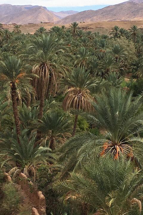 riad-zamzam-marrakech-spa-morocco-luxury-holiday-explore-daytrips-desert-palmtrees.jpg