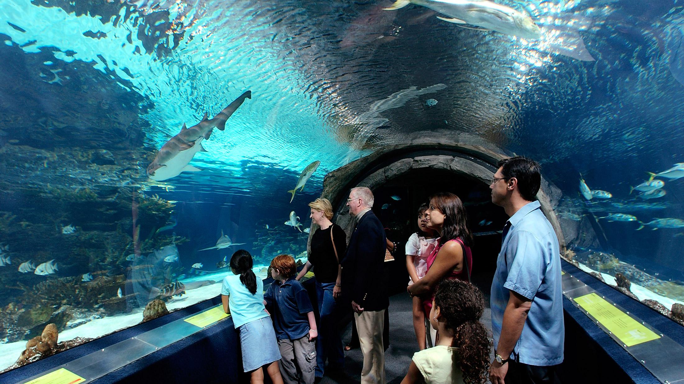 Adventure Aquarium -