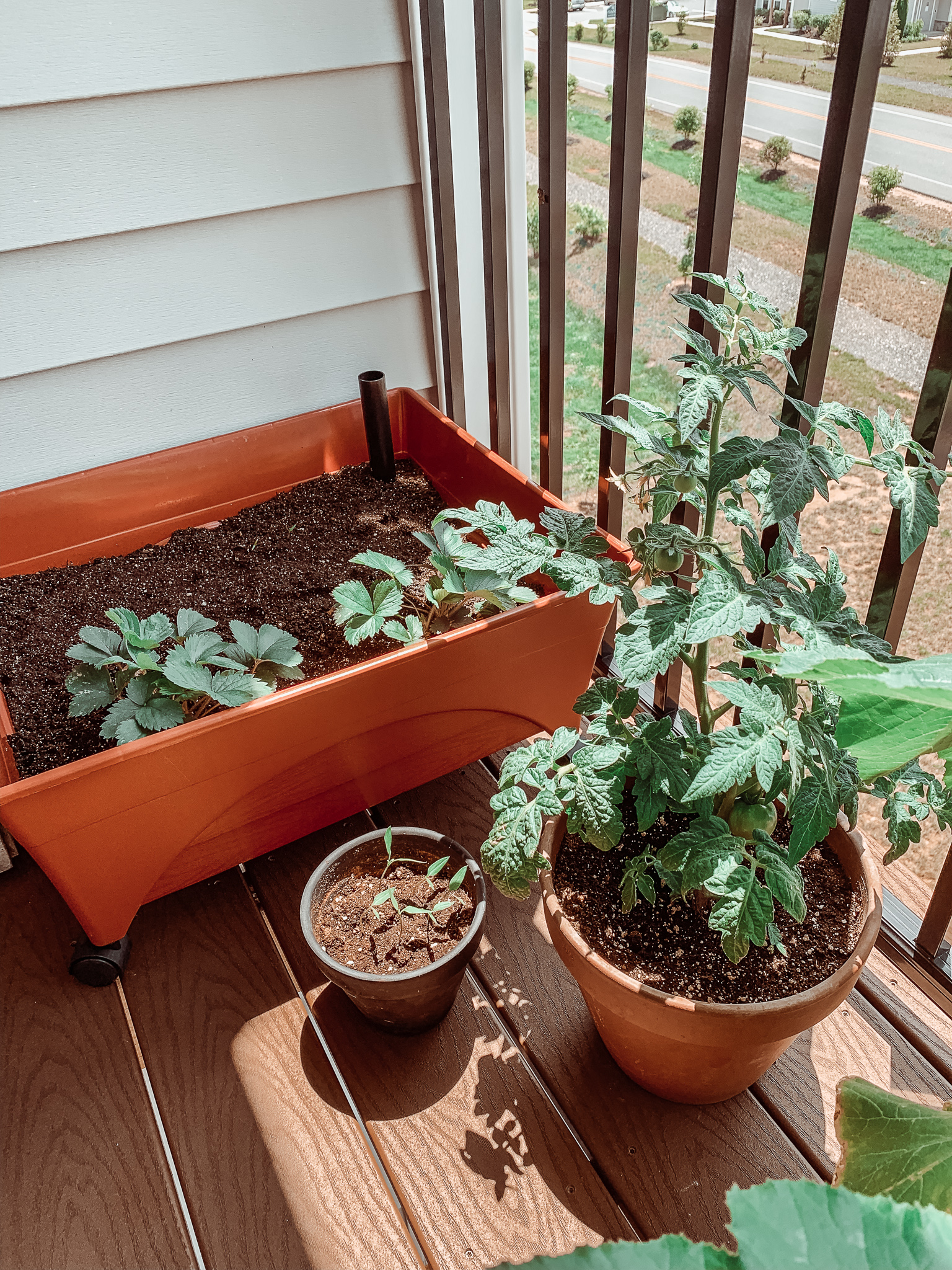 How to Grow a Fruit + Vegetable Garden from Your Balcony
