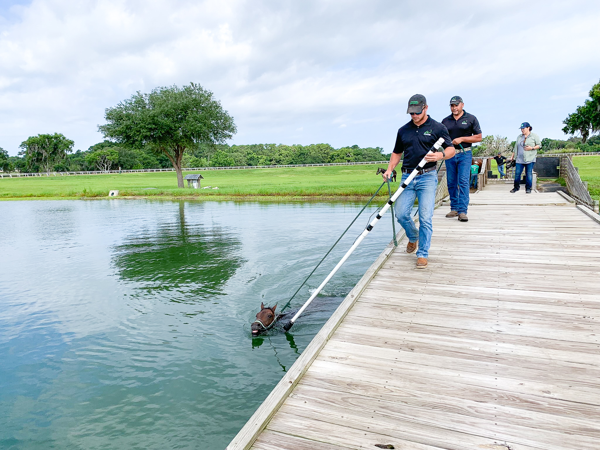 Swim Dock - The swim dock was created from scratch and had one design element in mind: safety. Swimming is a tool used by the training center to get horses fit and increase lung capacity.