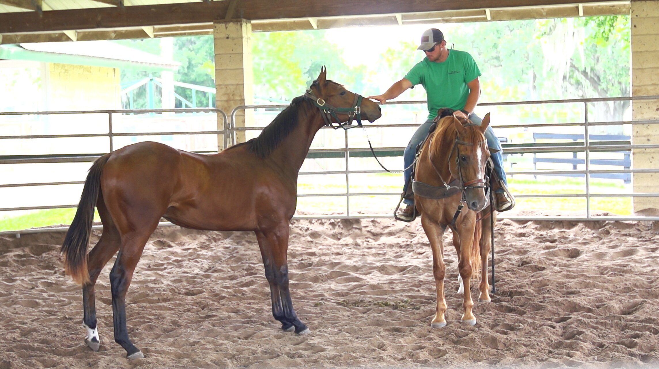 Covered Round Pen - The covered round pen is multipurpose. It provides a step in between stall and paddock turn out where a horse can stretch their legs, get fresh air and yet still be contained so they do not injure themselves. The round pen is also where all the horses get introduced to a saddle and rider for the first time.