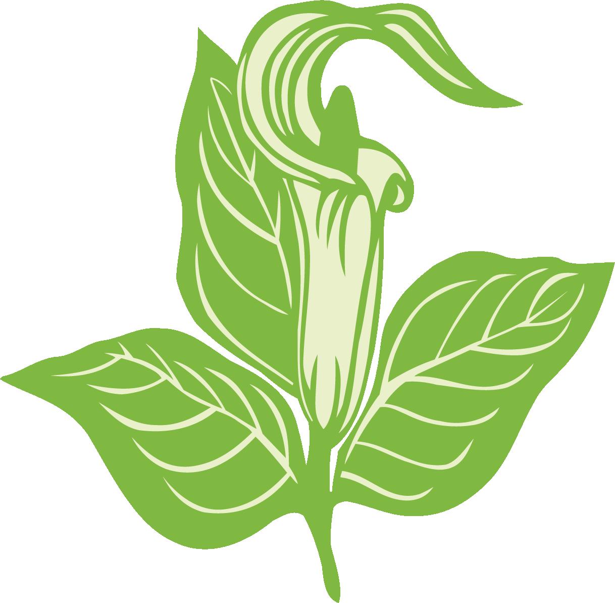 Genetti-Gardens-Leaf.png