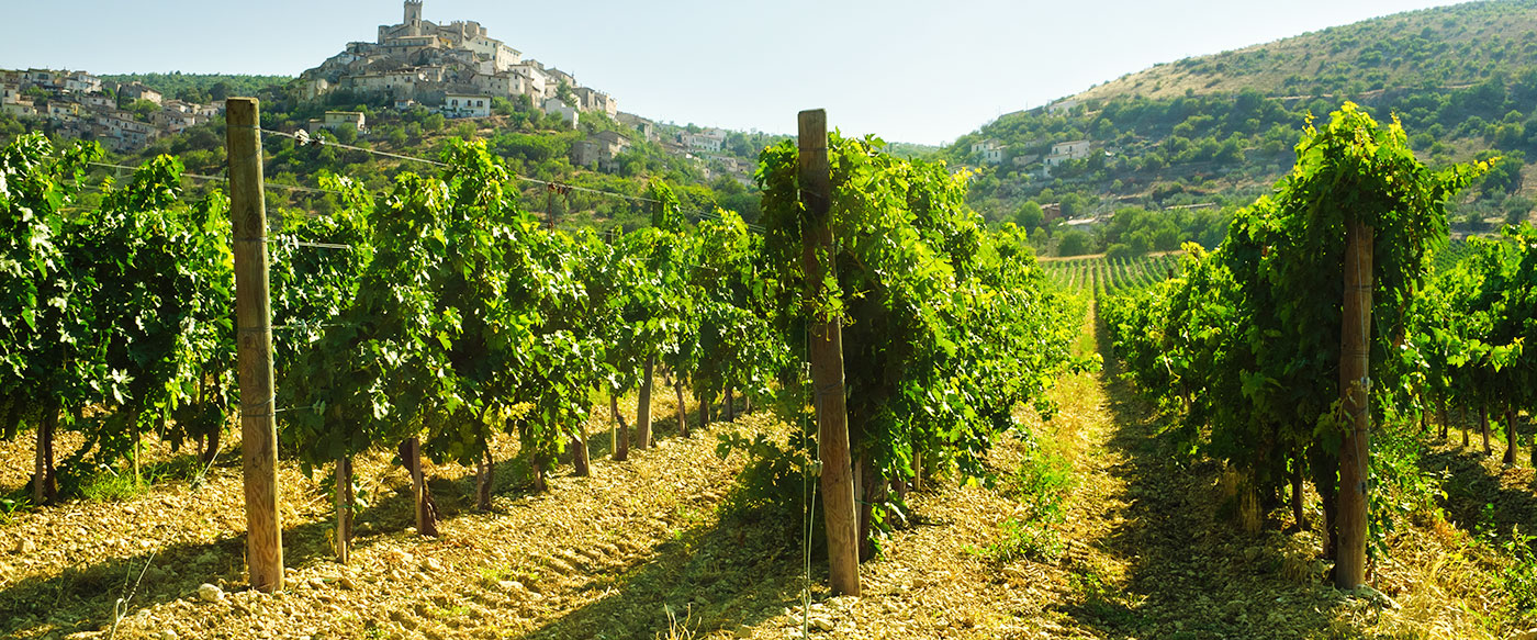 banner-abruzzo-vineyard-capestrano-italy-in-background.jpg