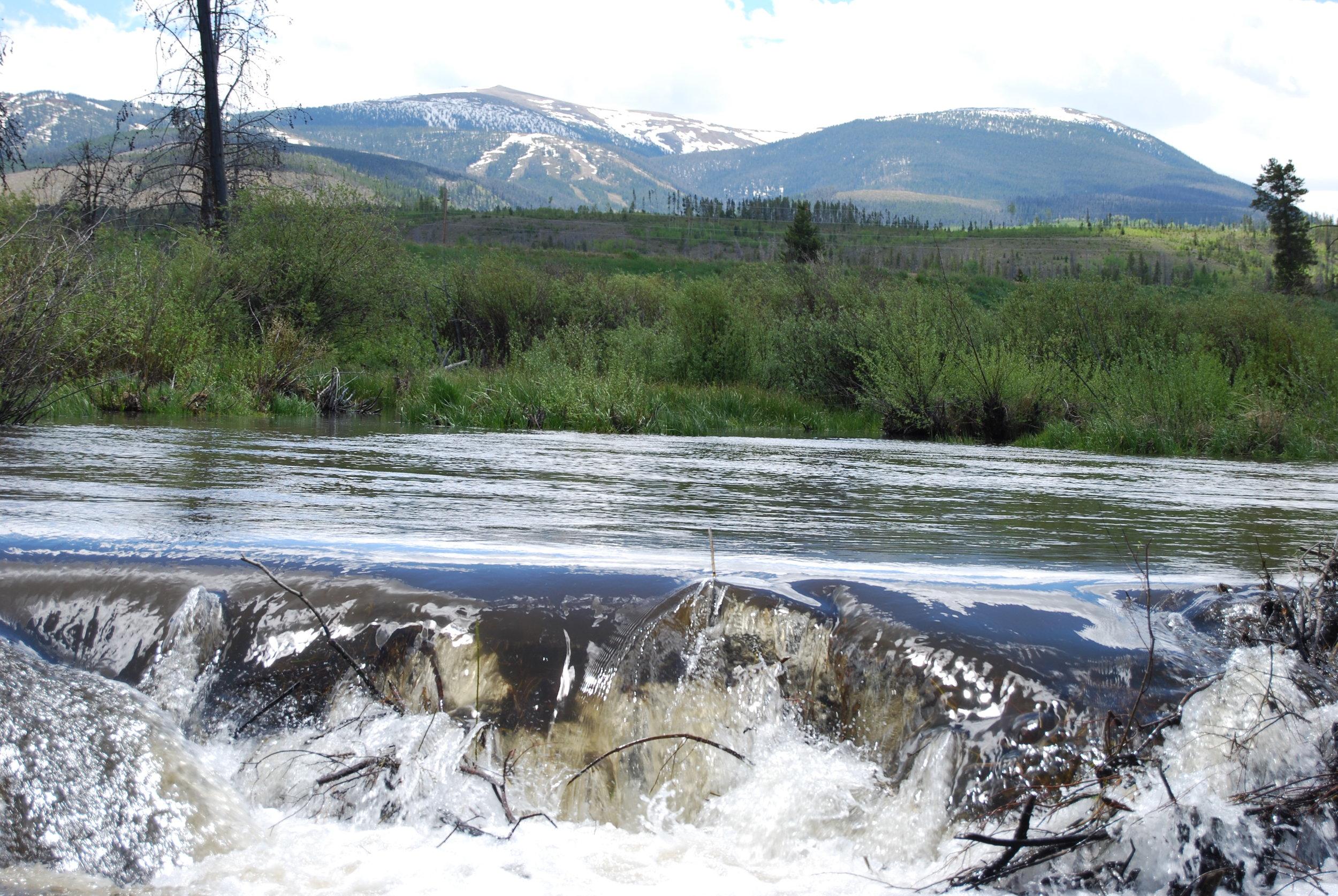 Fraser Beaver Dam 062019