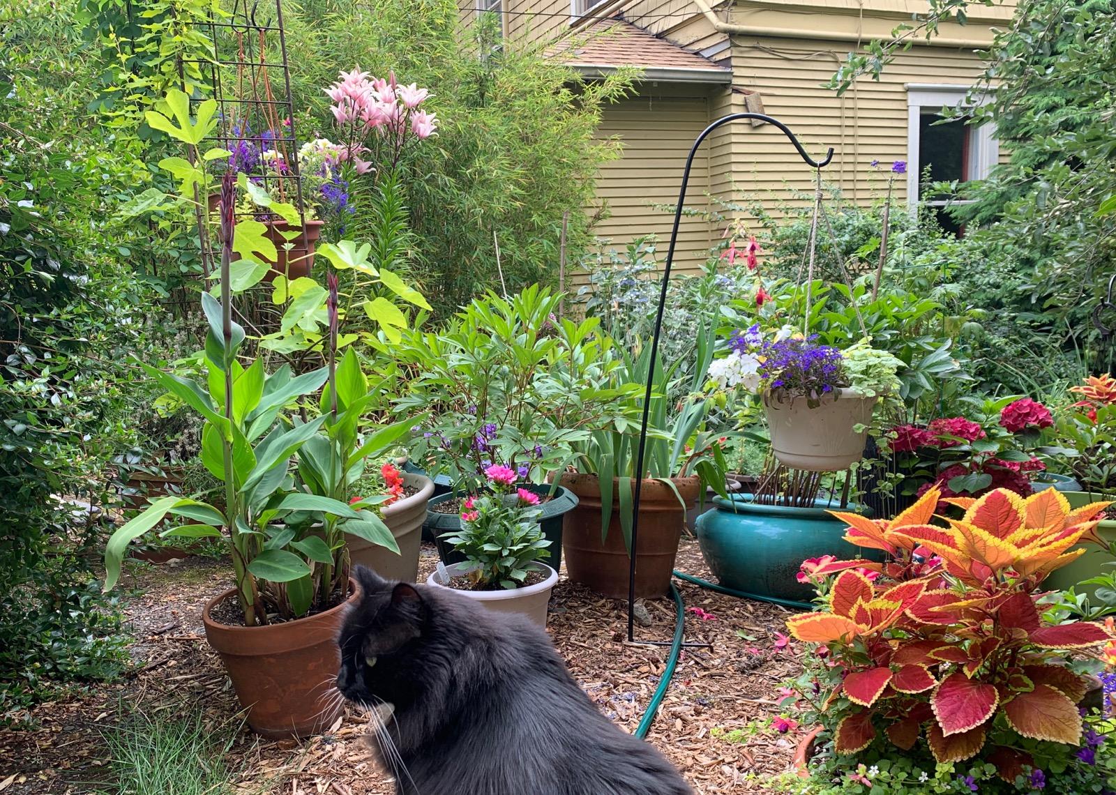 My cat, Fuzz, enjoying the peaceful garden with me.