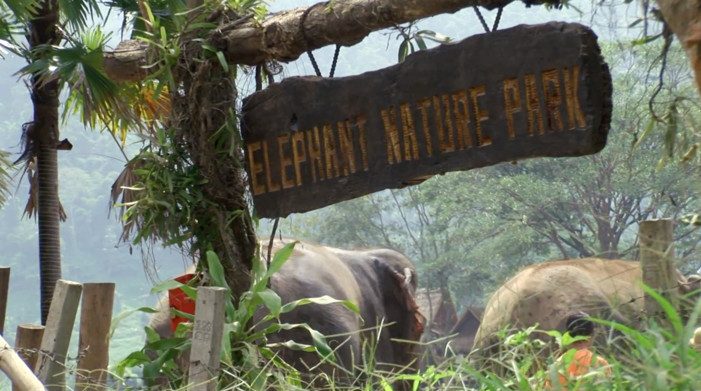 Elephant Nature Park Thailand Losing the Elephants film narrated by Martin Sheen