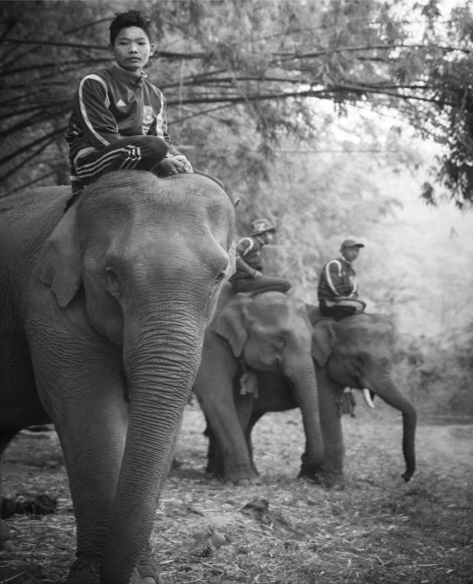 Myanmar Elephants