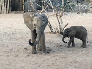 Elephants at Retetti