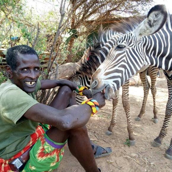Grevy's Zebra Orphans at the Reteti Sanctuary