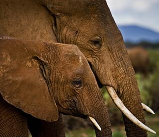save the elephants elephant orphan project