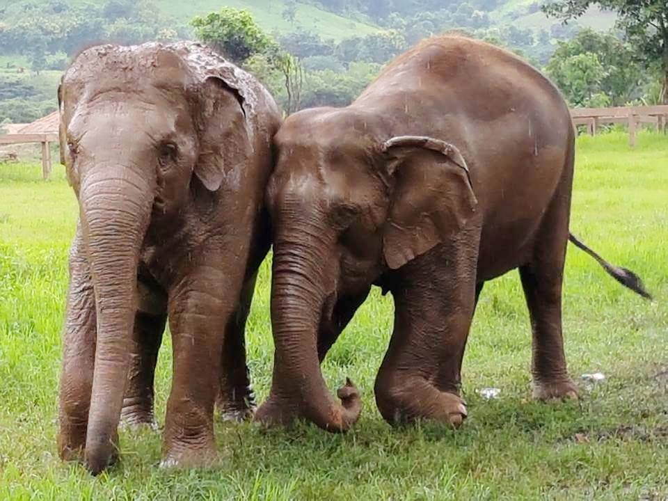 Kabu at Elephant Nature Park