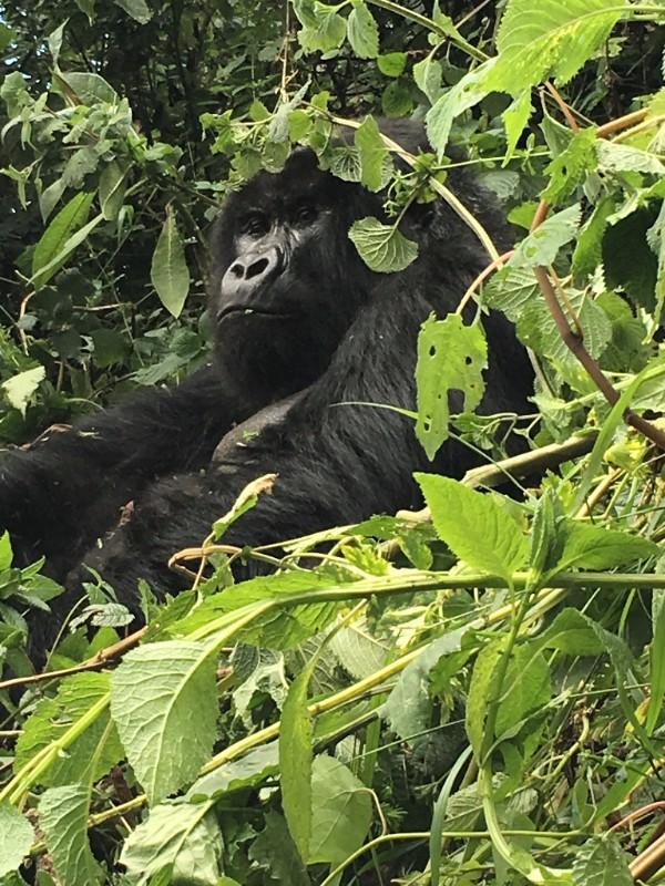 Our trip to Kenya and Rwanda