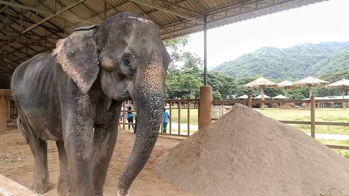 Photo courtesy of Elephant Nature Park and Save Elephant Foundation.