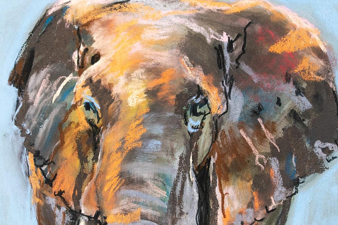 Elephant Artist Print by Kathryn Adele Schumacher