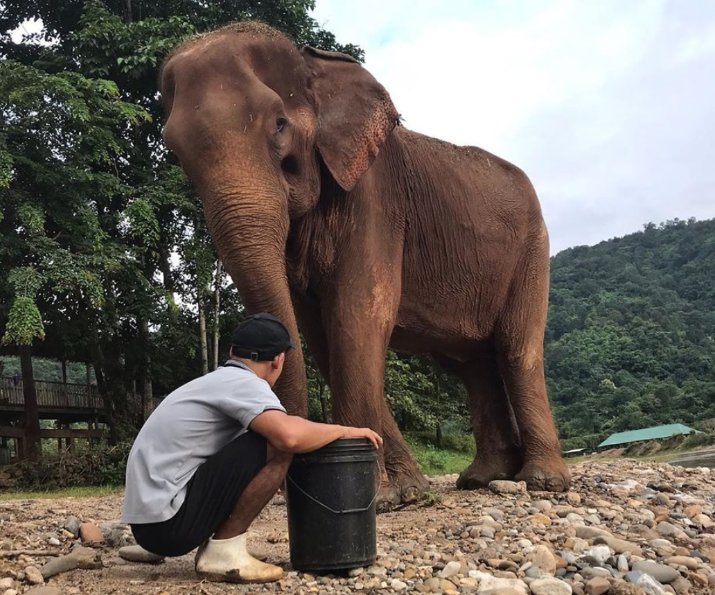 Yai Boon, recovering at Elephant Nature Park. Photo courtesy of Elephant Nature Park and Save Elephant Foundation.