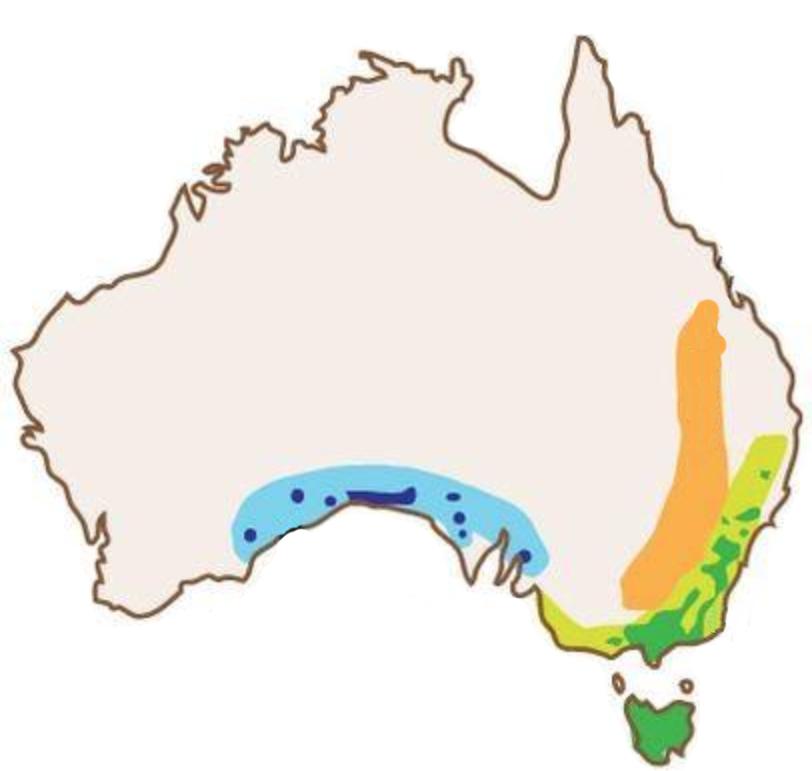 wombat-range-map.png