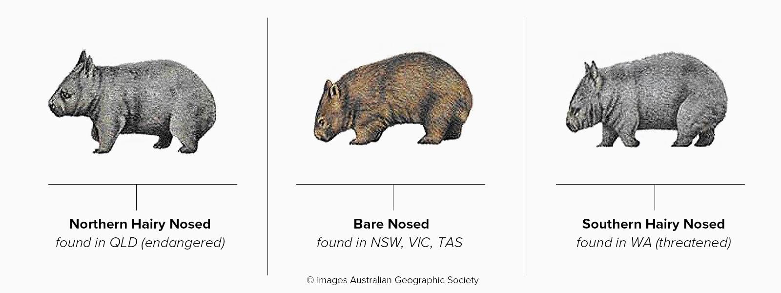 Wombat+Header.jpg