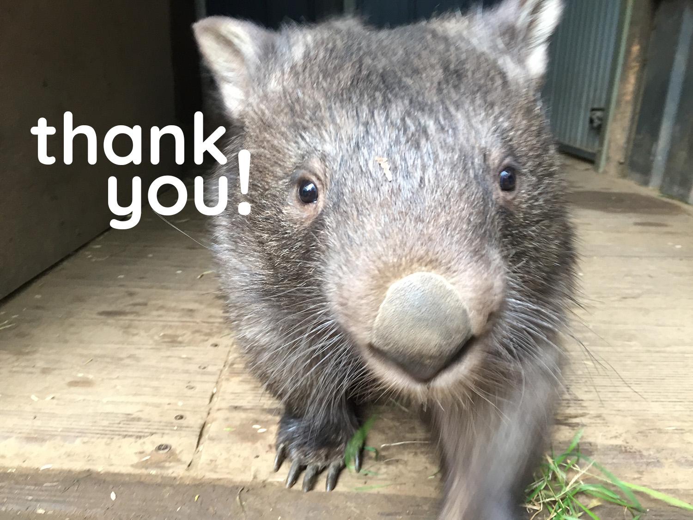 thank-you-wombat.jpg