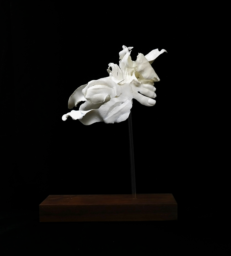 Nastergal 6 - Prototyping Material, Cherry Wood, Acrylic450 x 220 x 390 mmGlass Material380 x 380 x 500 mm