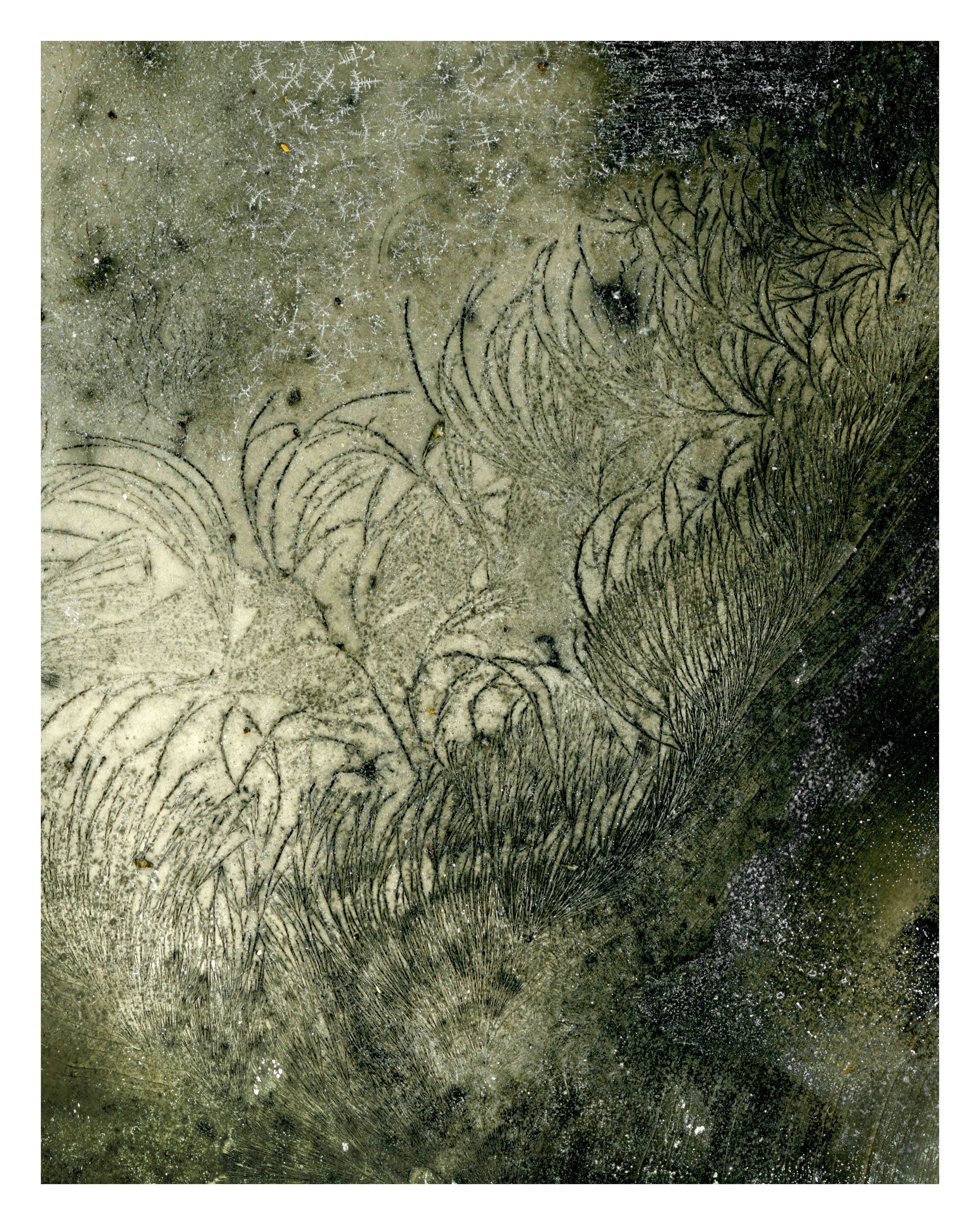 Moonlight Lush - 80 x 100 cm.jpg