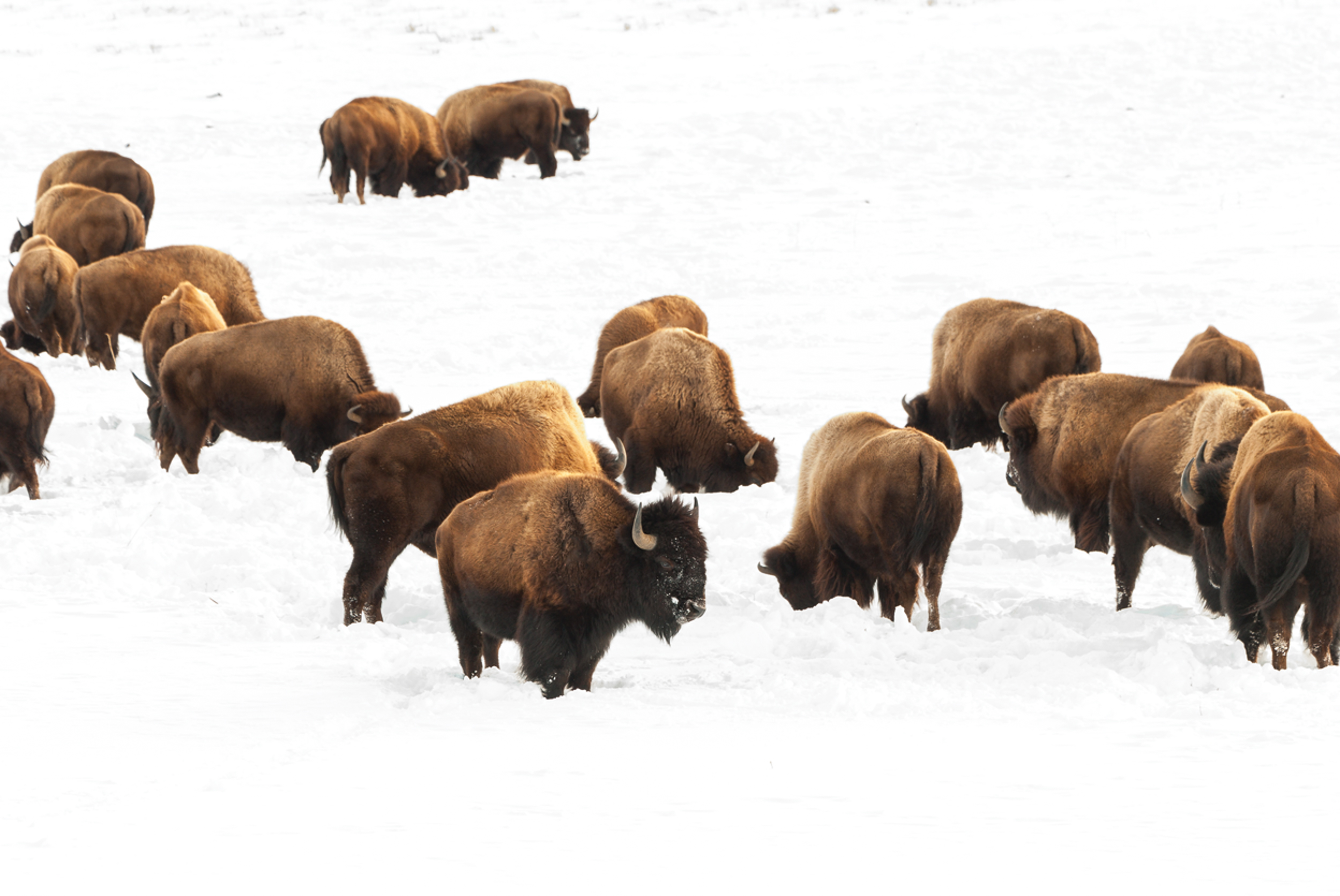 Bison Beauties business cards.jpg