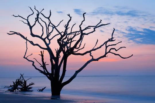 Botany Bay.png