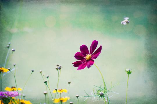 Garden Bee.png