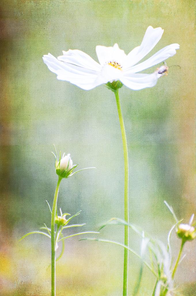 White flower bee.jpg