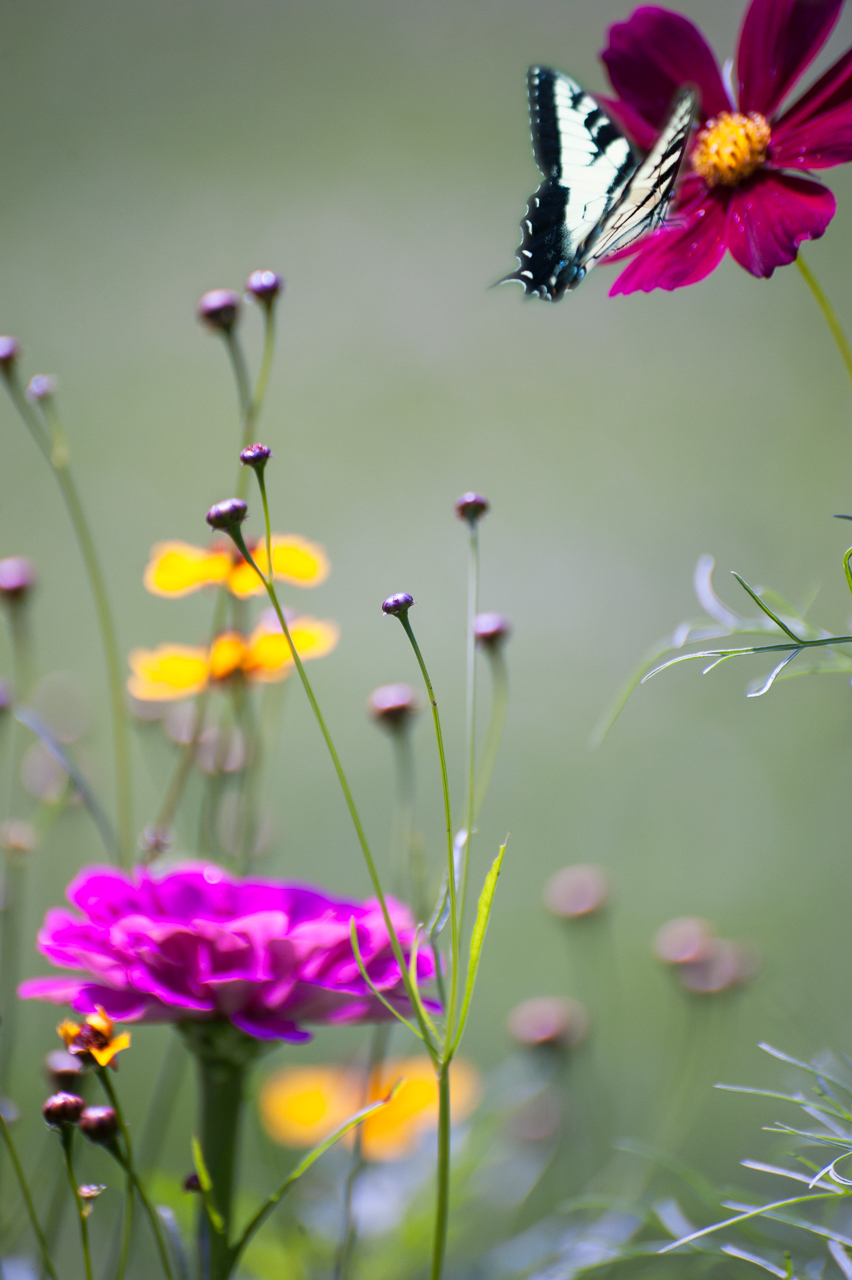Butterfly and flowers.jpg