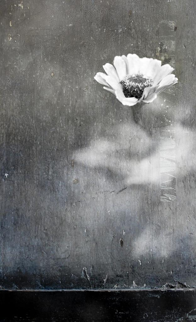 B&W Flower 1.jpg