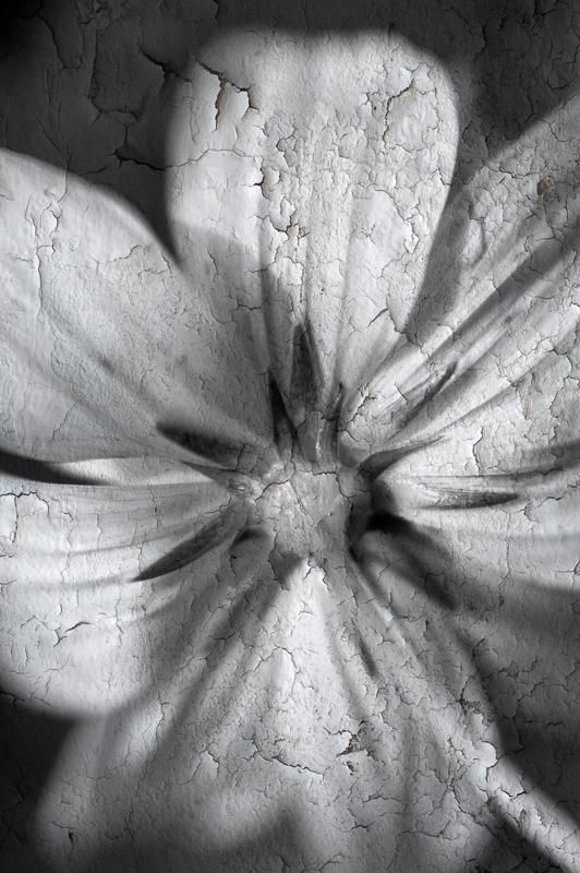 B&W Flower 3.jpg