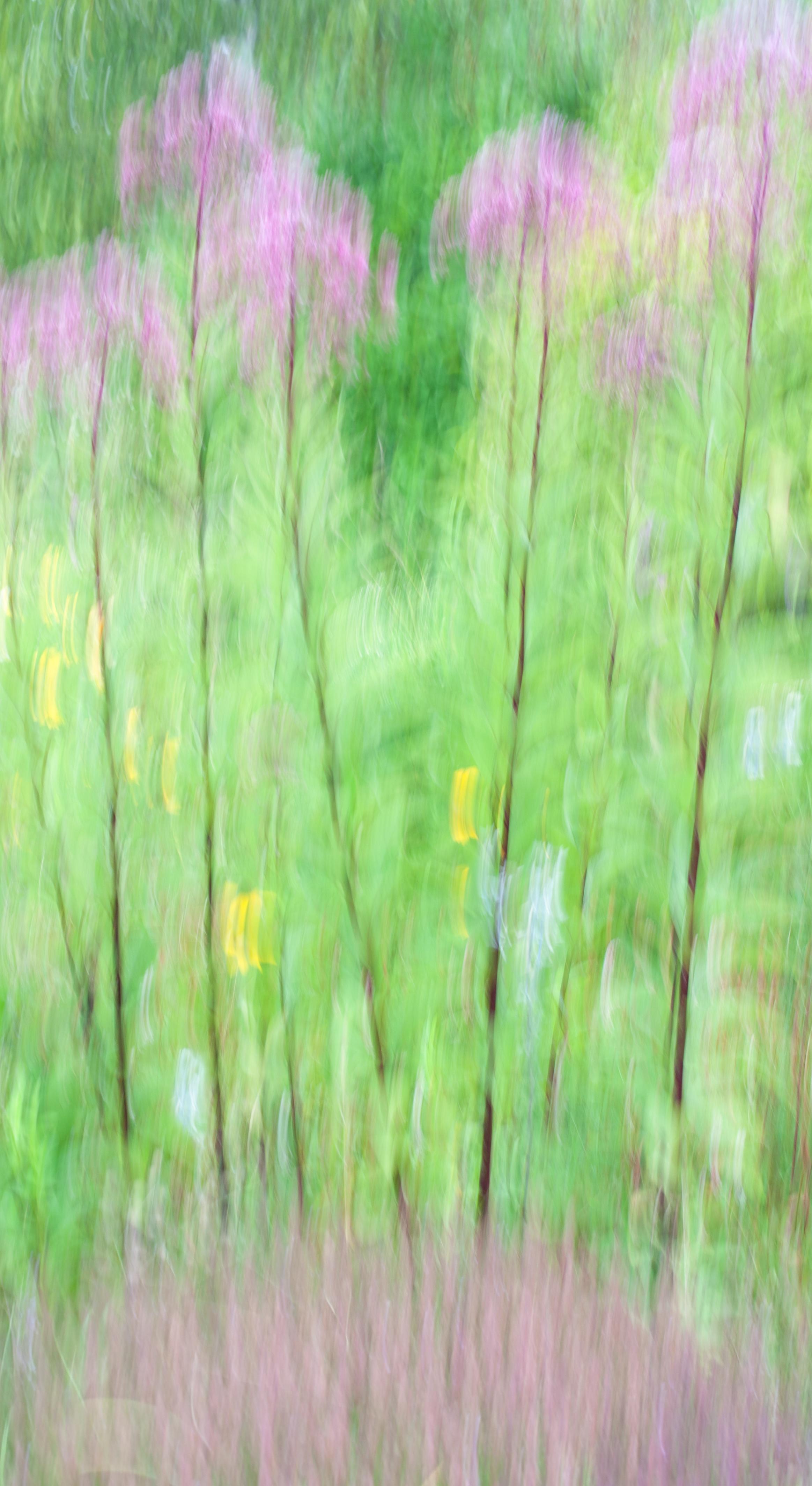 St Andrews Flowers.jpg