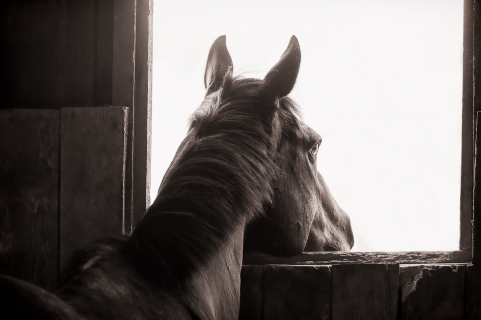 Horse #1.jpg