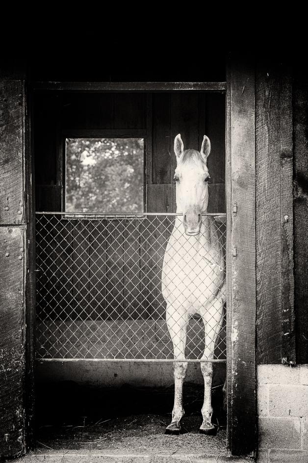 Horse #2.jpg