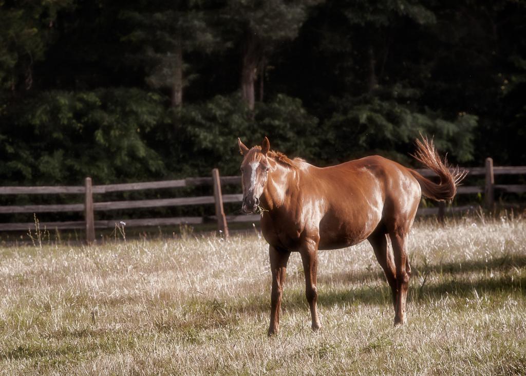 Kozura_equine (5 of 11).jpg