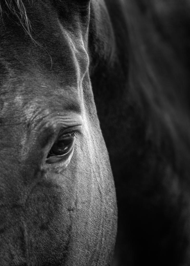 Kozura_equine (6 of 11).jpg