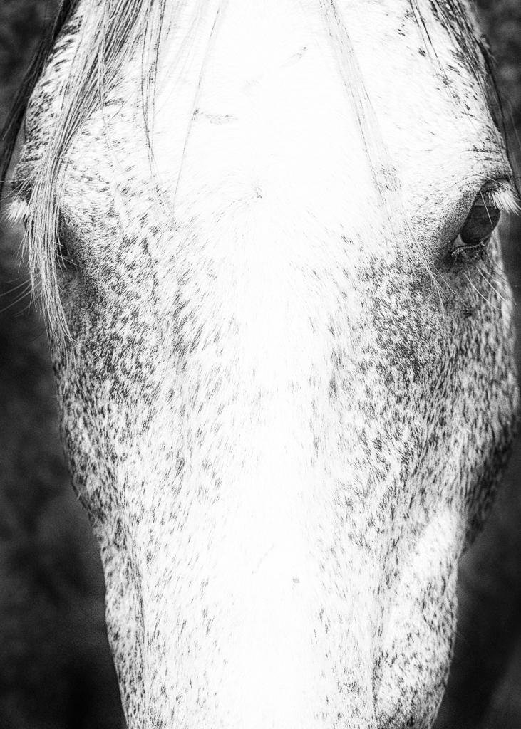 Kozura_equine (1 of 11).jpg