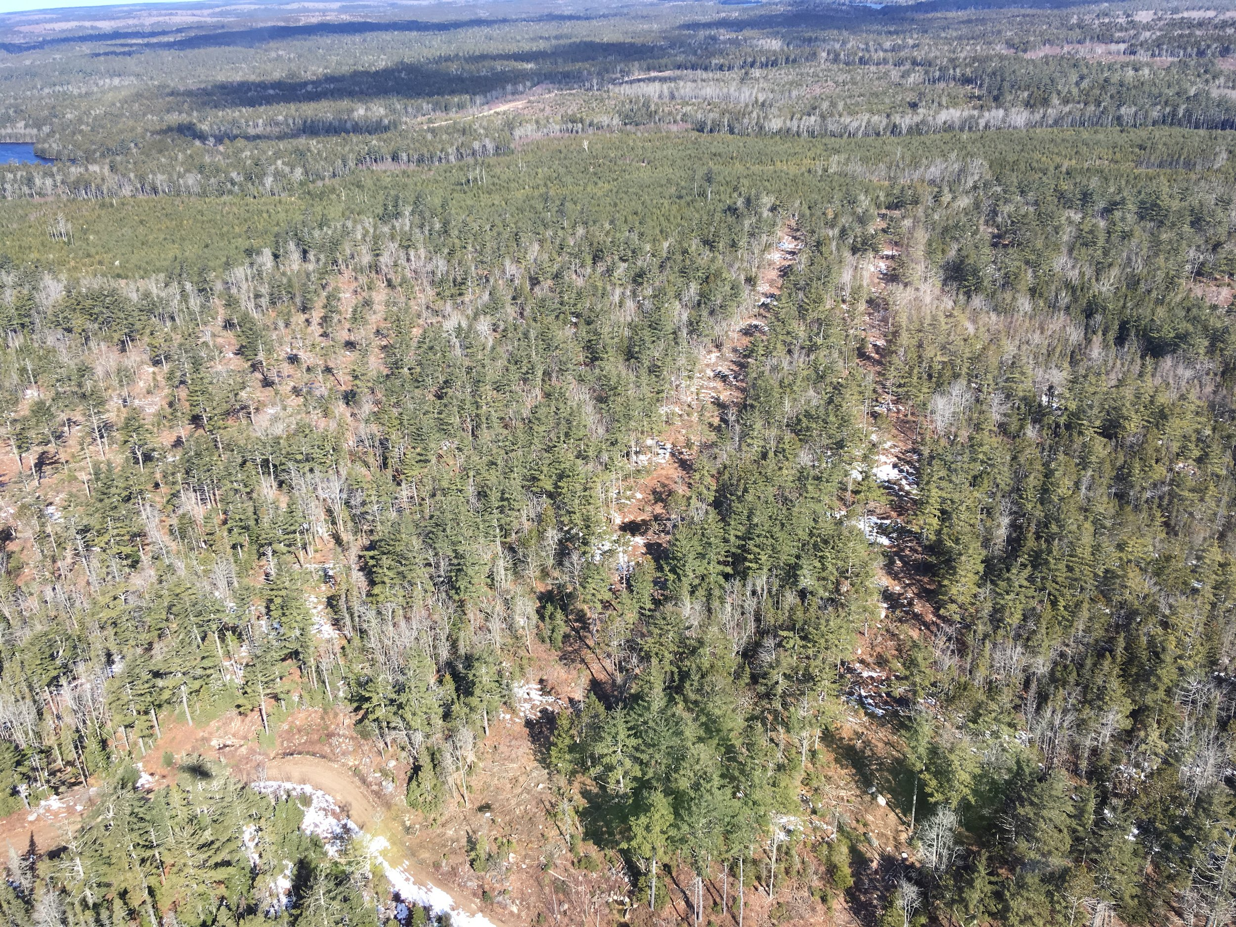Aerial view of the MCFC Spruce-Pine research trial
