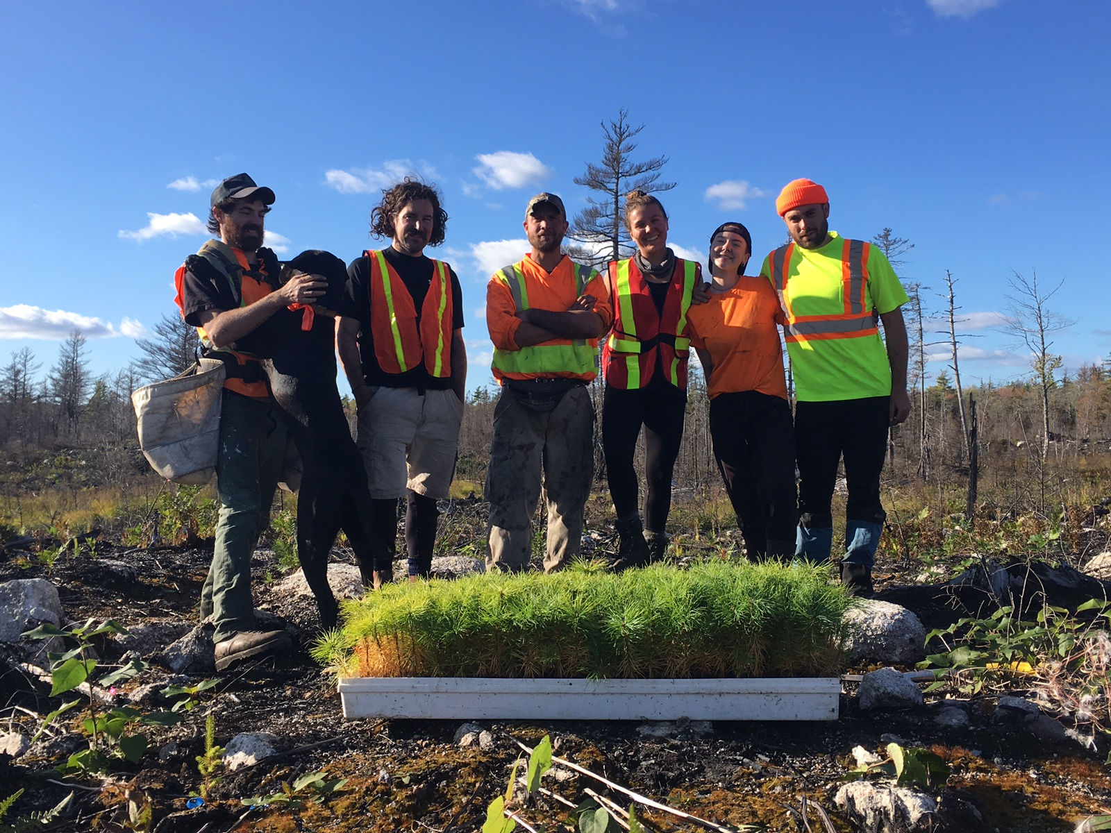 Tree planters from Community Forest Canada helping reforest following the Seven Mile Lake fire.