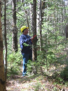 MCFC board member, Royce Ford teaches tree marking at a recent Best Management Practices for woodlot owners workshop (Photo: MTRI)