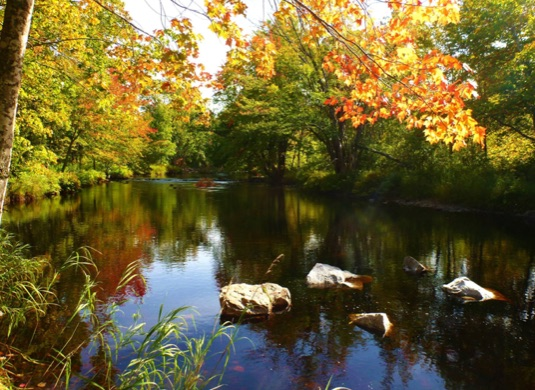 Healthy forested filter area on the Nictaux River (Photo: Clean Annapolis River Project)