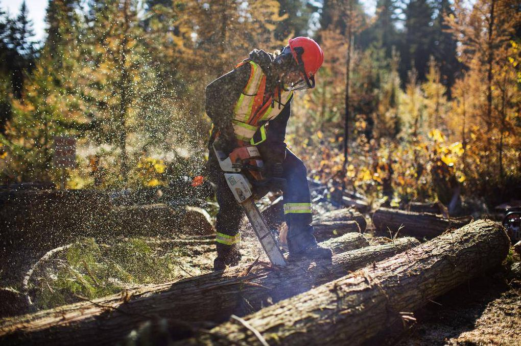 """Student Chris Major, 16, who attends Charles Bloom high school in Lumby, B.C., runs a chainsaw as part of the school's forestry program employing a more """"lumberjack-based"""" workforce (Globe and Mail photo)"""