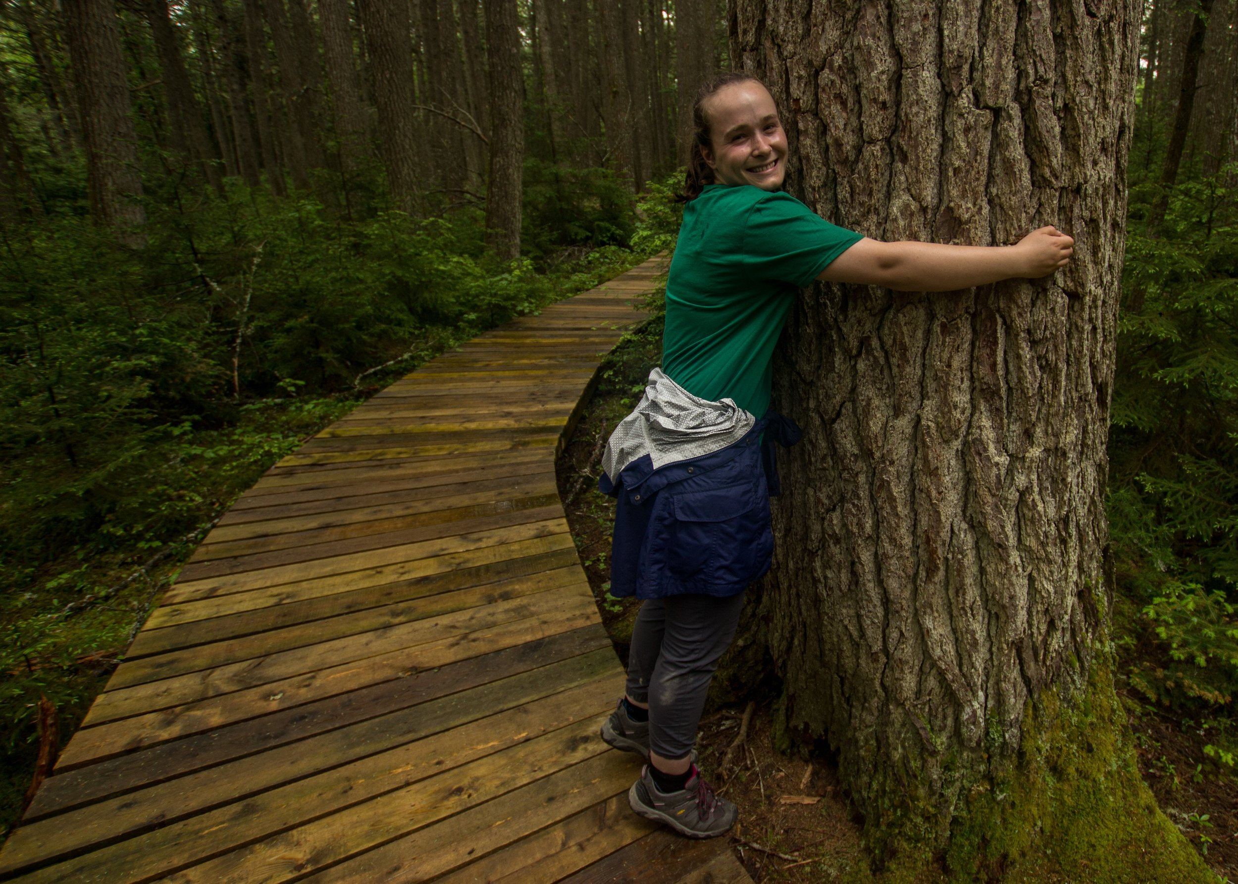 Giving a mother tree some love in Kejimkujik National Park