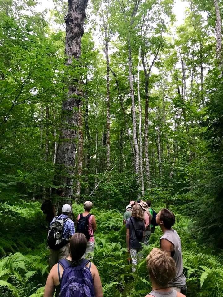 On our Old Growth Forest Tour