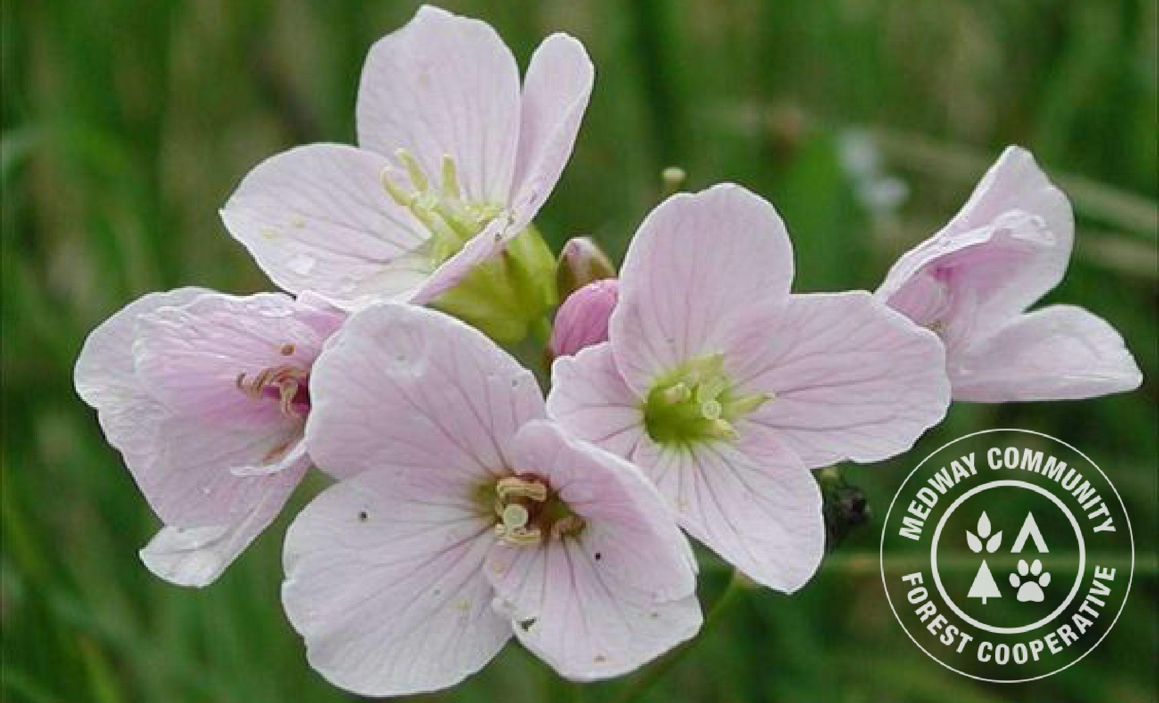 mayflower-01.jpg